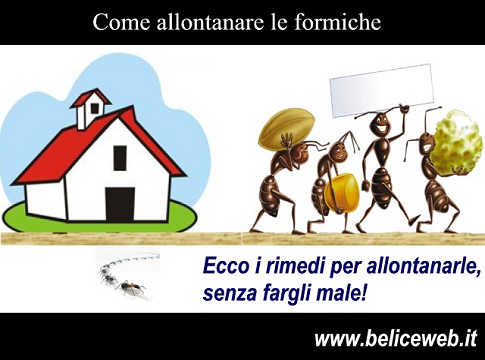 Formiche come faccio ad allontanare le formiche da casa mia - Come allontanare le formiche da casa ...